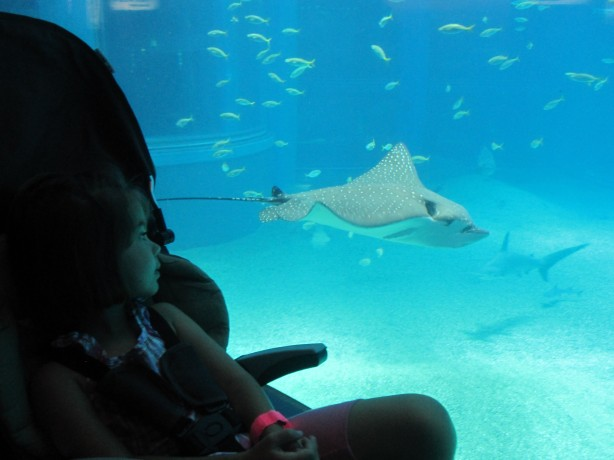 Osaka Aquarium: Grace watches a ray